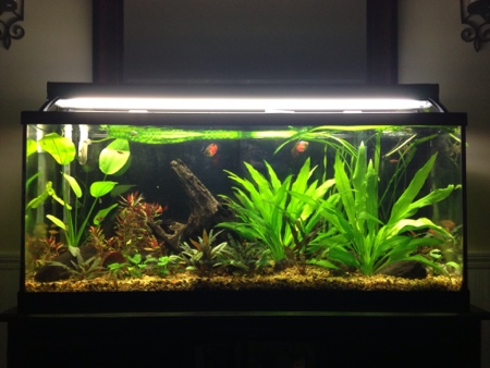 55 gallon planted tank